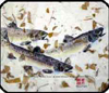 FISHSOXX GYOTAKU MOUSE PAD: THREE BROWN TROUT