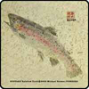 FISHSOXX GYOTAKU FISH COASTERS SET OF 4: RAINBOW TROUT