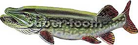MAGNETIC FRESHWATER FISH STICKERS: NORTHERN  PIKE (LARGE L)