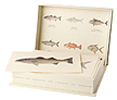 SALTWATER GAMEFISH OF NORTH AMERICA: 18 CARD SET