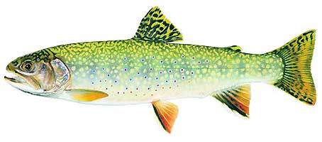 JOSEPH R. TOMELLERI TROUT PRINTS: EASTERN BROOK TROUT