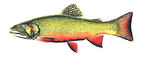 JOSEPH R. TOMELLERI TROUT PRINTS: BROOK TROUT