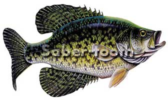 MAGNETIC  FRESHWATER FISH STICKERS: CRAPPIE (MEDIUM L)