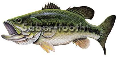 VINYL FRESHWATER FISH STICKERS: LARGE MOUTH BASS (MEDIUM R)