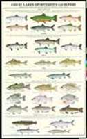 GREAT LAKES SPORTSMEN'S GAMEFISH POSTER--LAMINATED