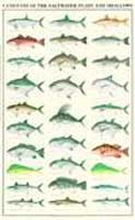 GAMEFISH OF THE SALTWATER FLATS & SHALLOWS POSTER--LAMINATED