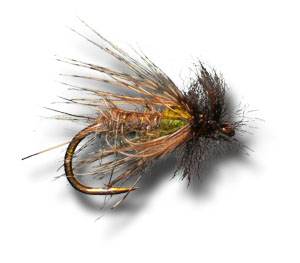 Peeking Caddis - Olive