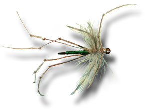 Daddy Long Legs Cranefly - Green