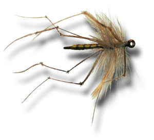 Daddy Long Legs Cranefly - Olive