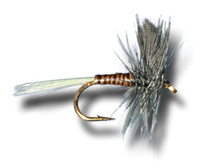 Blue Wing Olive, Quill Body
