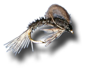 CDC Loopwing Emerger - Trico