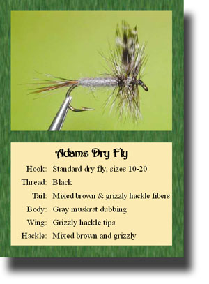 Fly Pattern Trading Cards - Set #1