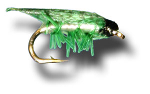 Green Leaf Hopper
