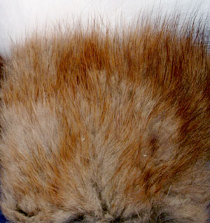 Muskrat Fur Patch
