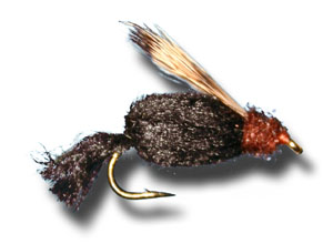 Sparkle Caddis Pupa - Black