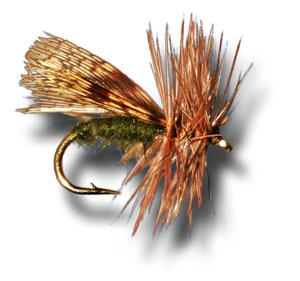 Spent Partridge Caddis