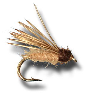 Stillborn Elk Caddis