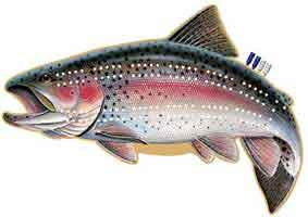 CRIBBAGE BOARDS: RAINBOW TROUT