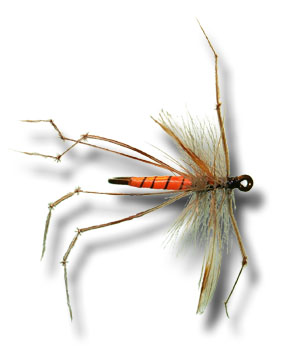 Daddy Long Legs Cranefly - Orange