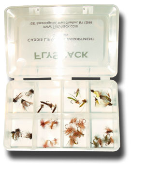 Caddis Lifecycle Assortment - 36 Flies